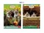 211837_ - zeszyt A5 w kratkę Pigna Nature Amici 42 kartki, 2 szt./op.